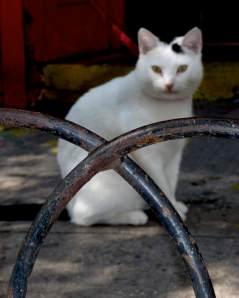 Greenwich Village Shop Cat